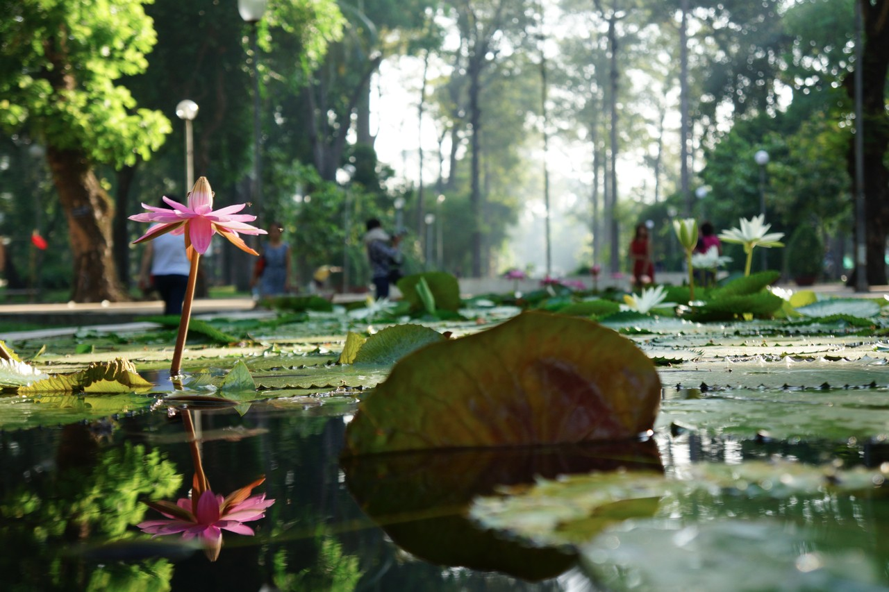 lotus cin park, saigon, vietnam